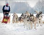 Kraj Liberecki zawody psich zaprzęgów